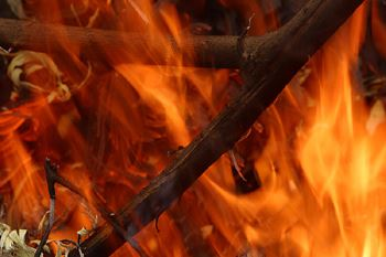 picture of flames burning twigs and leaves